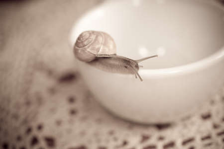 colorful little snail wandering on awhite  cup Banco de Imagens - 94919016