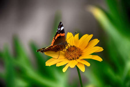 beautiful dark yellow flowers growing on a green meadow and a butterfly on them