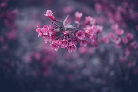 beautiful bush with pink flowers in close-up