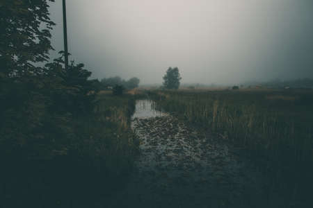 beautiful little narrow river flowing through the meadow on gray misty day Stock Photo