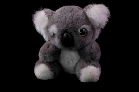 little gray teddy koala on a black background close-up