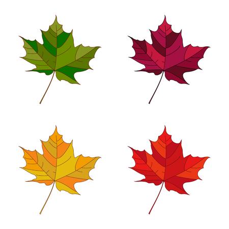 Vector autumn set leaves. Collection autumn leaves. Leafs set element floral color garden art. Fall leaf.