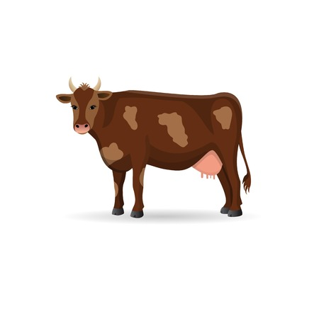 udders: Brown spotted cow isolated .Cute farm cattle domestic animal. Vector flat ilustration on a white background.