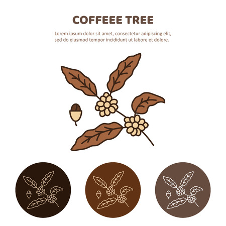 Coffee tree branch with beans. Coffee plant with leaf, berry, coffee bean. Line icon.