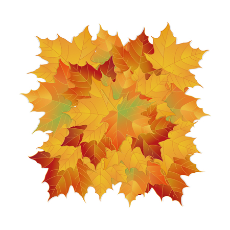 Vector autumn fallen leaves. Leafs element floral color garden