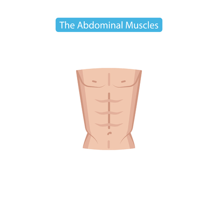 The abdominal muscles fit icon. Perfect abdominal muscles of bodybuilder athletic man torso flat icon vector illustration for apps website media print. Isolated on white background.