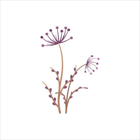 Meadow plant isolated on white