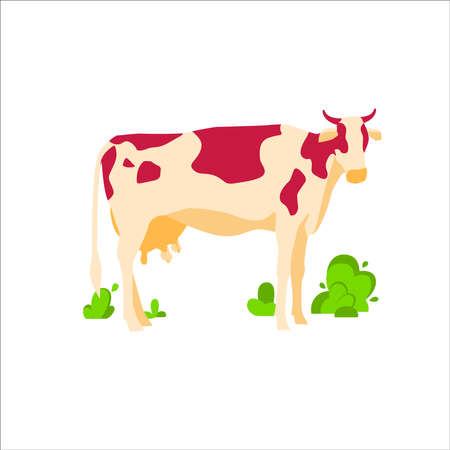 Spotted grazing cow dairy cattle. Domestic herbivorous animal, farm livestock. Agriculture and farming concept flat vector illustration isolated on white background Illustration