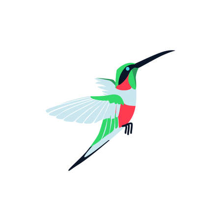 Flying bright tropical hummingbird. Beautiful bird with colored feathers and wings. Tropical nature wildlife design element cartoon vector illustration isolated on white background