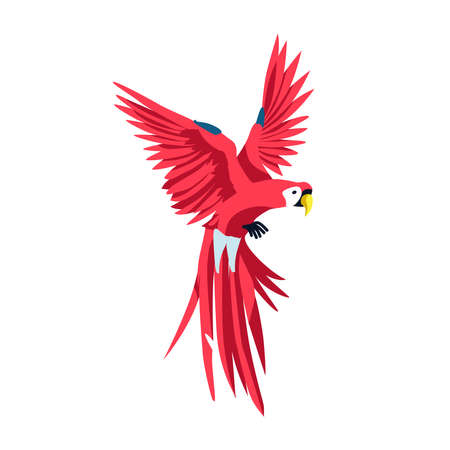 Macaw exotic tropical bird. Beautiful parrot with bright red colorful plumage. Tropical nature wildlife design element cartoon vector illustration isolated on white background Vektorové ilustrace