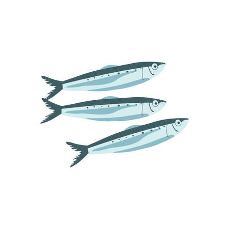 Commercial fish species set. Sprat, herring, sardine, anchovy or saury fresh marine fishes, seafood menu, fish market design cartoon vector illustration isolated on white background