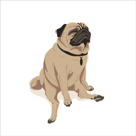Cute fawn pug dog pet. Adorable friendly purebred chubby domestic animal in funny pose cartoon vector illustration isolated on white background