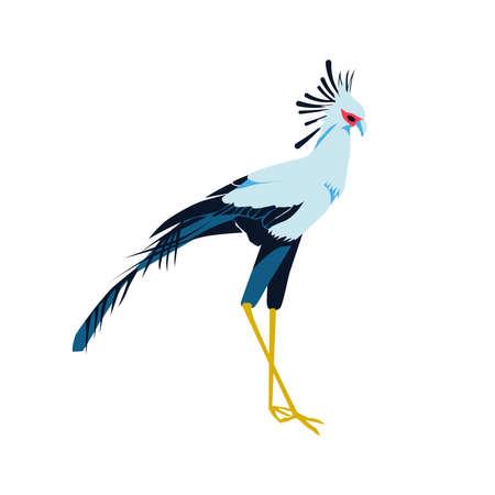 Secretarybird or sagittarius serpentarius exotic bird. Beautiful african bird with black and white plumage cartoon vector illustration isolated on white background Ilustração Vetorial