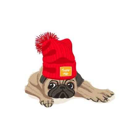 Cute pug dog in knitted hat. Adorable friendly purebred chubby pet animal wearing woolen cap with pompom cartoon vector illustration isolated on white background