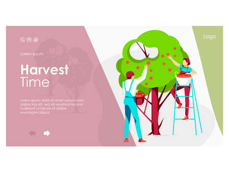 Harvest time landing page. Farmers picking fruits from tree, people working and harvesting in garden. Organic gardening, eco farming and agricultural business concept flat vector illustration  イラスト・ベクター素材