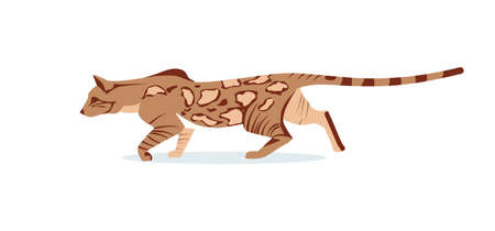 Beautiful hunting graceful bengal cat. Domestic hybrid cat breed cartoon vector illustration isolated on white background  イラスト・ベクター素材