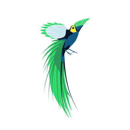 Beautiful long tailed tropical bird. Exotic birdie with bright colorful feathers and wings. Tropical nature wildlife design element cartoon vector illustration isolated on white background