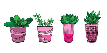 Vector hand drawn  illustration with home plants in pots. Colorful design for print, textile, postcard