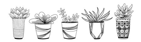 Vector ink  illustration with home plants in pots. Hand drawn ink vector illustration. Çizim