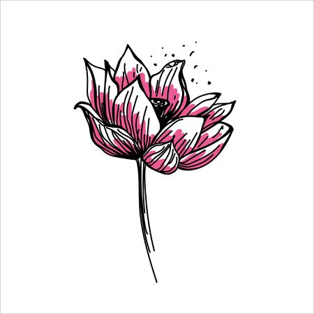 Vector ink illustration with lotus flowers. Ink hand drawn illustration with flowers. Sketch ink lotus