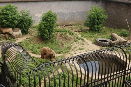 moat wall: Bear