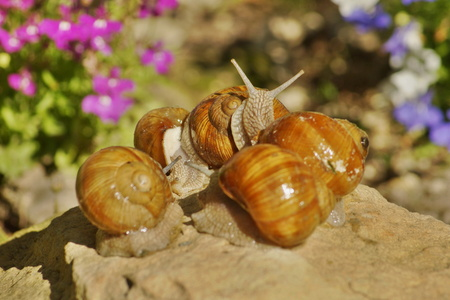 omnivore animal: Slugs family