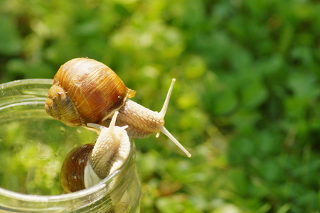 omnivore animal: Slug enemy Gardens