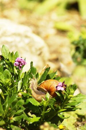 babosa: Babosas enemigas Jardines Foto de archivo