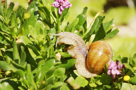 Hermaphrodite: Everything snail eating green Stock Photo