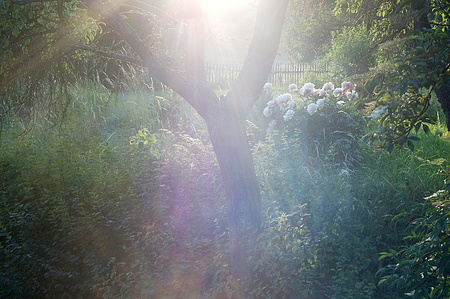 forgotten: light on the forgotten garden Stock Photo