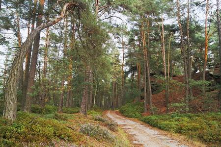 pinewood: Pinewood Stock Photo