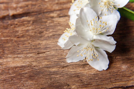 Jasmine on a wooden table