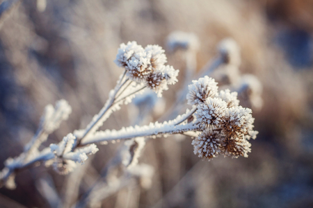 covered fields: Frost on the grass Stock Photo