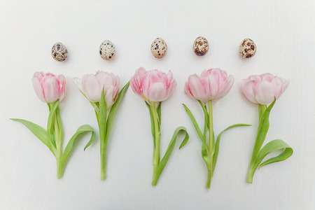 Spring greeting card. Easter eggs with cotton and tulips on rustic white wooden planks. Easter concept. Flat lay. Spring flowers tulips