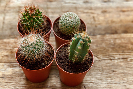 different cactus on wooden background ornamental plant on wood