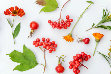 Autumn floral composition. Plants viburnum berries, dogrose, orange and yellow fresh flowers on white background. Autumn fall natural plants ecology wallpaper concept. Flat lay, top view, copy space