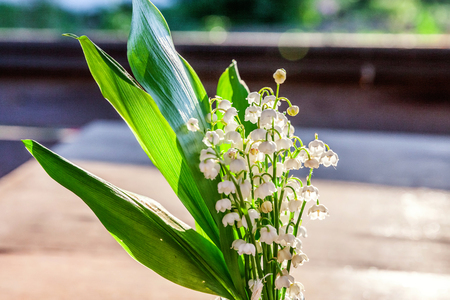 Bouquet of flowers beautiful smell lily of the valley or may-lily under soft sunlight on rustic old vintage wooden background. Garden in spring or summer. Blooming ecology nature concept Imagens