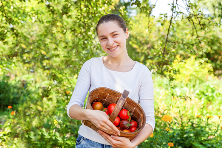 Gardening and agriculture concept. Young woman farm worker holding basket picking fresh ripe organic tomatoes in garden. Greenhouse produce. Vegetable food production