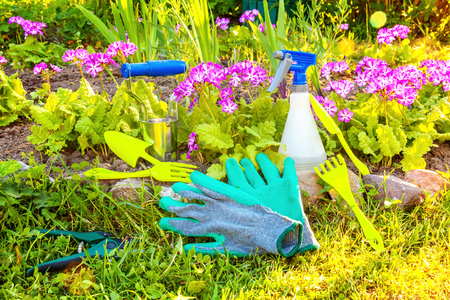 Gardening tools, shovel, spade, pruner, rake, glove, primrose flower on bed background. Spring or summer in the garden, eco, nature, horticulture hobby concept