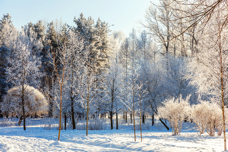 Frosty trees in snowy forest, cold weather in sunny morning. Tranquil winter nature in sunlight. Inspirational natural winter garden or park. Peaceful cool ecology nature landscape background