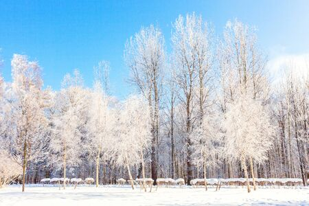 Frosty trees in snowy forest, cold weather in sunny morning. Tranquil winter nature in sunlight. Inspirational natural winter garden or park. Peaceful cool ecology nature landscape background Stock fotó - 125684217
