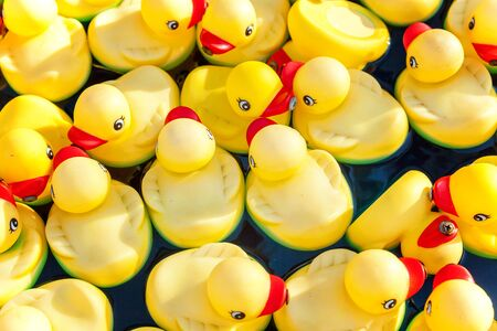 Many rubber yellow toy ducks floating in children's pool close up