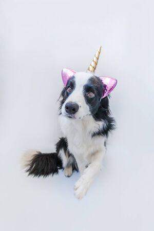 Funny Kawaii portrait chiot chien border collie avec corne de licorne isolé sur fond blanc. Chien avec du maïs, dogcorn mignon. Ma vie de licorne heureuse. Soins pour animaux de compagnie et concept animal