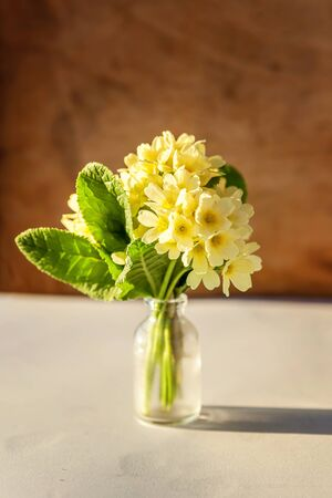 Easter concept. Bouquet of Primrose Primula with yellow flowers in glass vase on wooden backdrop. Inspirational natural floral spring or summer blooming background. Copy space