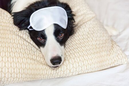 Do not disturb me let me sleep. Funny puppy border collie with sleeping eye mask lay on pillow blanket in bed. Little dog at home lying and sleeping. Rest good night insomnia siesta relaxation concept