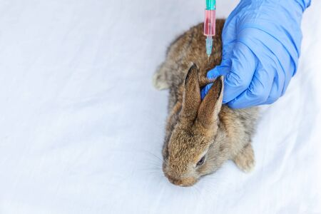 Veterinarian woman with syringe holding and injecting rabbit on ranch background close up. Bunny in vet hands for vaccination in natural eco farm. Animal care and ecological farming concept Stock fotó