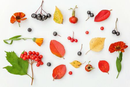 Autumn floral composition. Plants viburnum rowan berries dogrose fresh flowers colorful leaves isolated on white background. Fall natural plants ecology wallpaper concept. Flat lay top view
