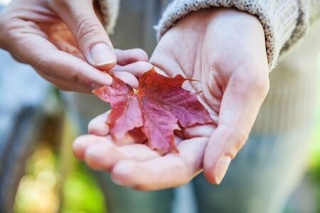 Closeup natural autumn fall view woman hands holding red orange maple leaf on park background. Inspirational nature october or september wallpaper. Change of seasons concept