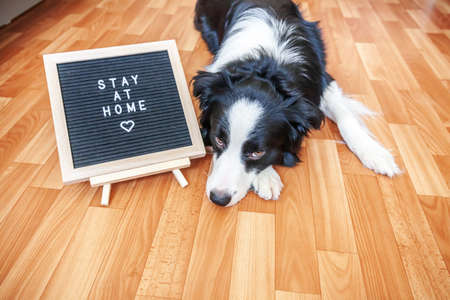 Stay home. Funny portrait of cute puppy dog with letter board inscription STAY AT HOME word lying on floor. New lovely member of family little dog at home indoors. Pet care quarantine concept Zdjęcie Seryjne
