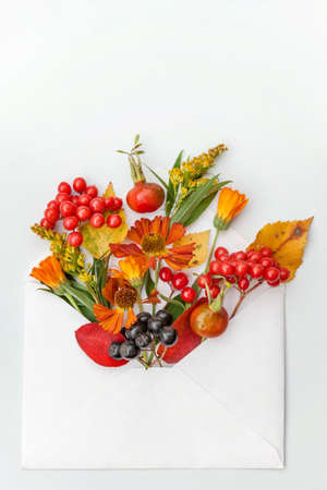 Autumn floral composition. Plants viburnum rowan berries dogrose fresh flowers colorful leaves in mail envelope on white background. Fall natural plants concept. Flat lay top view mockup